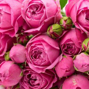 Бордюрные и Спрей розы